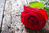 One red rose close-up on wooden background with water droplets on the petals — Stock Photo