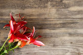 Beautiful lily on wooden background  with copy space — Stock Photo