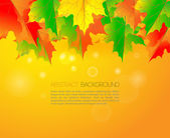 闪亮的秋天叶落枫和背景和阳光的美丽。文本的地方. — 图库矢量图片