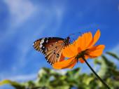 Farfalla sul fiore da vicino — Foto Stock