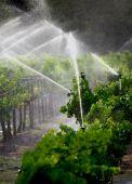 Watering the Vineyard — Stock Photo