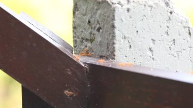 Many Red Ants — Vidéo