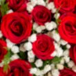 Abstract Blur bouquet of red roses and white flower in Heart sha — Stock Photo #66029205