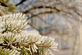 Branch of Christmas tree on snowy background — Stock Photo