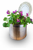Recycle of an old tin can as vase for a single flowers — Stock Photo