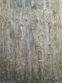 Bark tree wood texture abstract — Stock Photo