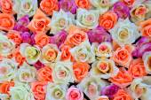 Background of colored roses — Stock Photo