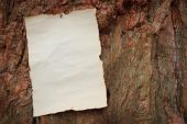 Antique paper nailed to a tree — Stock Photo