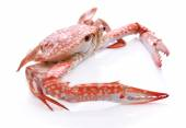 Red crab isolated on white background — Stock Photo