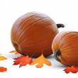 Постер, плакат: Fat pumpkin harvest ready for holiday meals