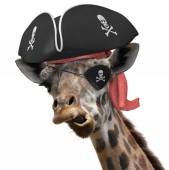 Funny animal picture of a cool giraffe wearing a pirate hat and eyepatch with crossbones — Stock Photo