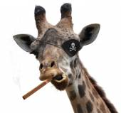 Awesome giraffe with a pirate eyepatch and a big cigar — Stock Photo