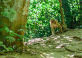Monkeys living naturally There is fierce — Stock Photo