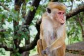 Monkey sitting on a tree, wildlife — Stock Photo