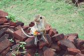 Affe saß auf einem Baum, Wildtiere — Stockfoto