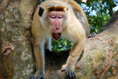 Monkey sitting on a tree, wildlife. — Stock Photo