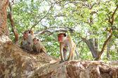 Apa sitter på ett träd, vilda djur. — Stockfoto