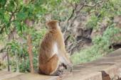 Monkey sitting on a tree, wildlife. — Stockfoto