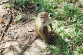 Monkey sitting on a tree, wildlife. — ストック写真