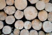 Kłody drewna stosowego drzewo — Zdjęcie stockowe