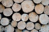 Stacked tree wood logs — Stock Photo
