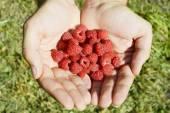 Raspberry in the hands of men — Stock Photo