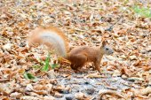 Little squirrel on a tree — Stock Photo