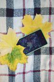Phone on yellow autumn leaves,autumn concept — Stock Photo