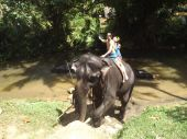 Colombo, Sri Lanka . January 21.2014:a group of tourists came to see the wild elephants — Stock Photo