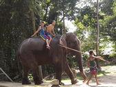 Los turistas vinieron a ver los elefantes salvajes — Foto de Stock