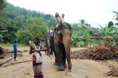 Group of tourists came to see the wild elephants — Stock Photo