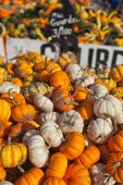 Mini Gourds for Sale — Photo