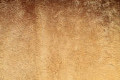 Pelz-hintergrund — Stockfoto
