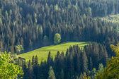 Forest, Carinthia, Austria — Stock Photo