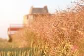 Harvest Time — Stock Photo
