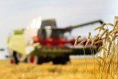 Harvest time — ストック写真