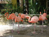 Bahamas Zoo on New Providence — Stock Photo