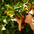 Happy carefree summer girl in orange trees with green foliage in — Stock Photo #70182665