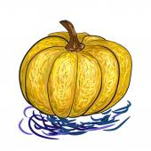 Pumpkin, sketch on a white background — Stock Vector