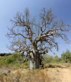Boabe strom — Stock fotografie