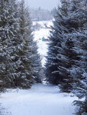 Winter mountain forest. Snowy road. — Stock Photo