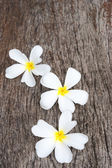 White frangipani (plumeria) on wood background, selective focus. — Stock Photo