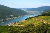 Rhine valley in Rudesheim — Stock Photo