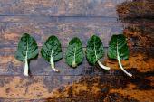 Fresh Organic Green Chard — Stockfoto