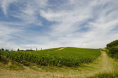 Vineyards in Tuscany in chianti area — Stock Photo