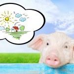 Pig, pets, piglet. — Stock Photo #74931519
