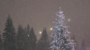 Christmas tree and snow falling in a forest background — Stock Video
