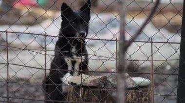Perro ladrando detrás de una valla — Vídeo de Stock