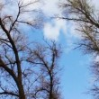 Clouds moving on a background of trees in the forest. Timelapse — Stock Video #70861605