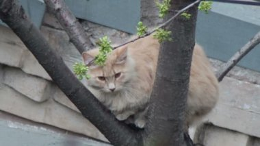 Red cat sitting on the tree. — Stock Video
